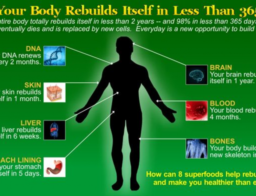 YOUR BODY REBUILD ITSELF