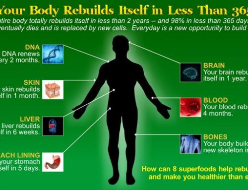 YOUR BODY REBUILD ITSELF