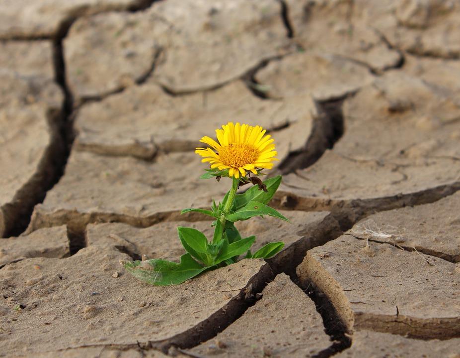 WER WAREN DIE ESSENER? – Dr. GABRIEL COUSSENS