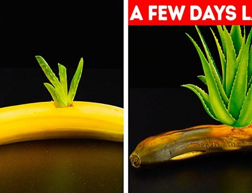 27 GARDENING HACKS YOU'LL WANT TO KNOW – time to dedicate your time to earth